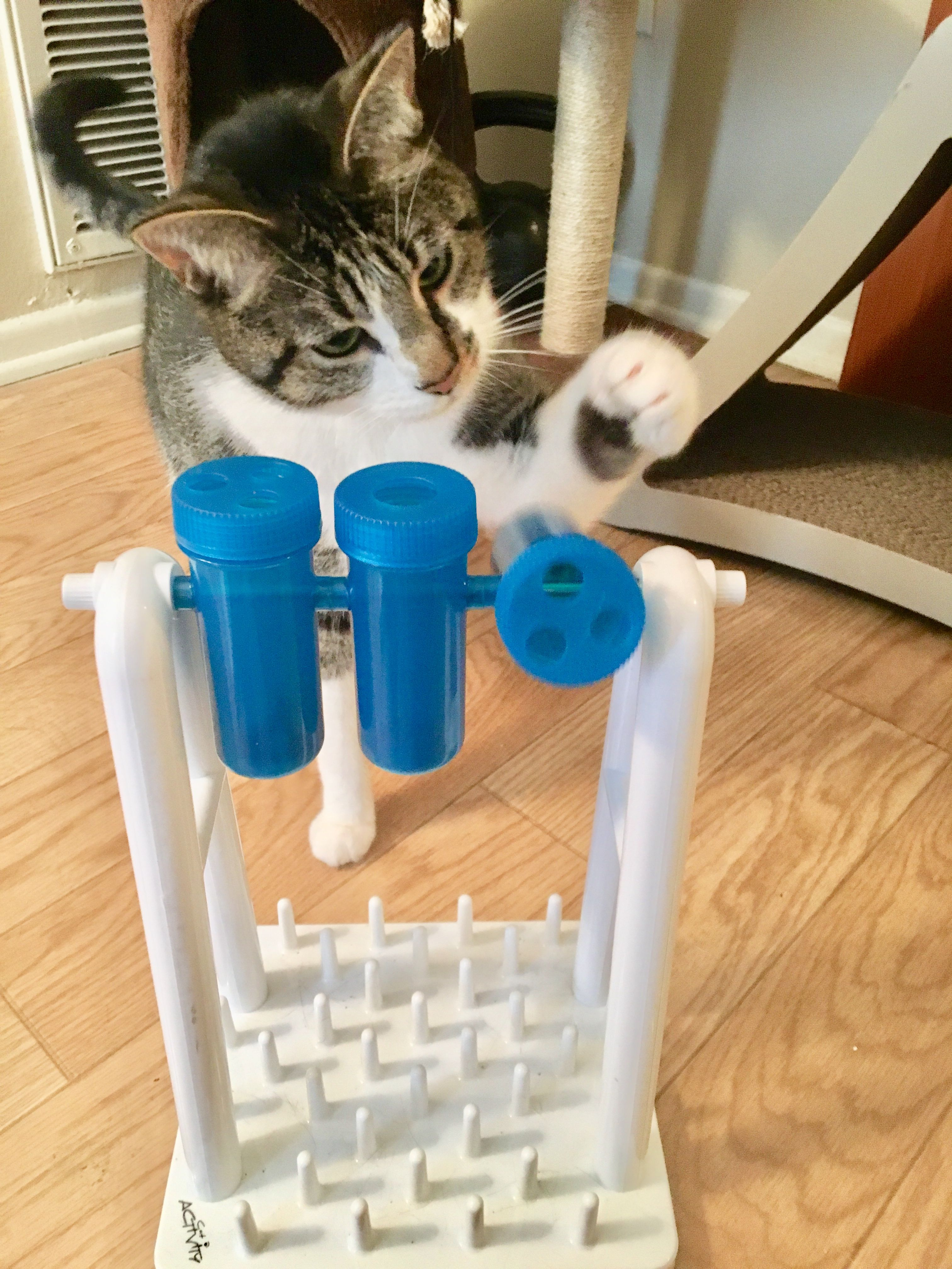 How to Make Your Own Kitty Enrichment Feeders and Toys in