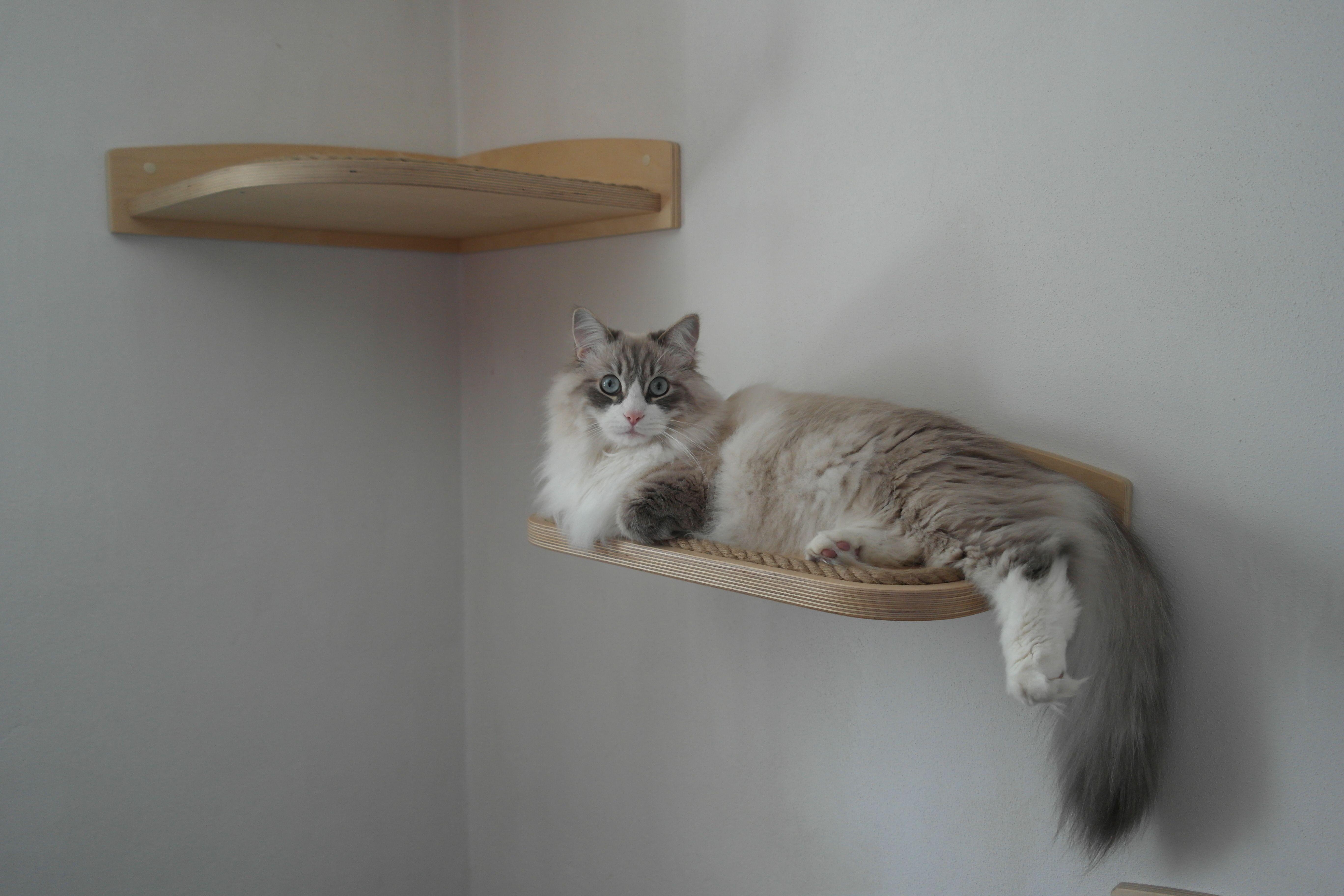 Mensole da parete per gatti mensole floating shelves for Parete attrezzata gatti