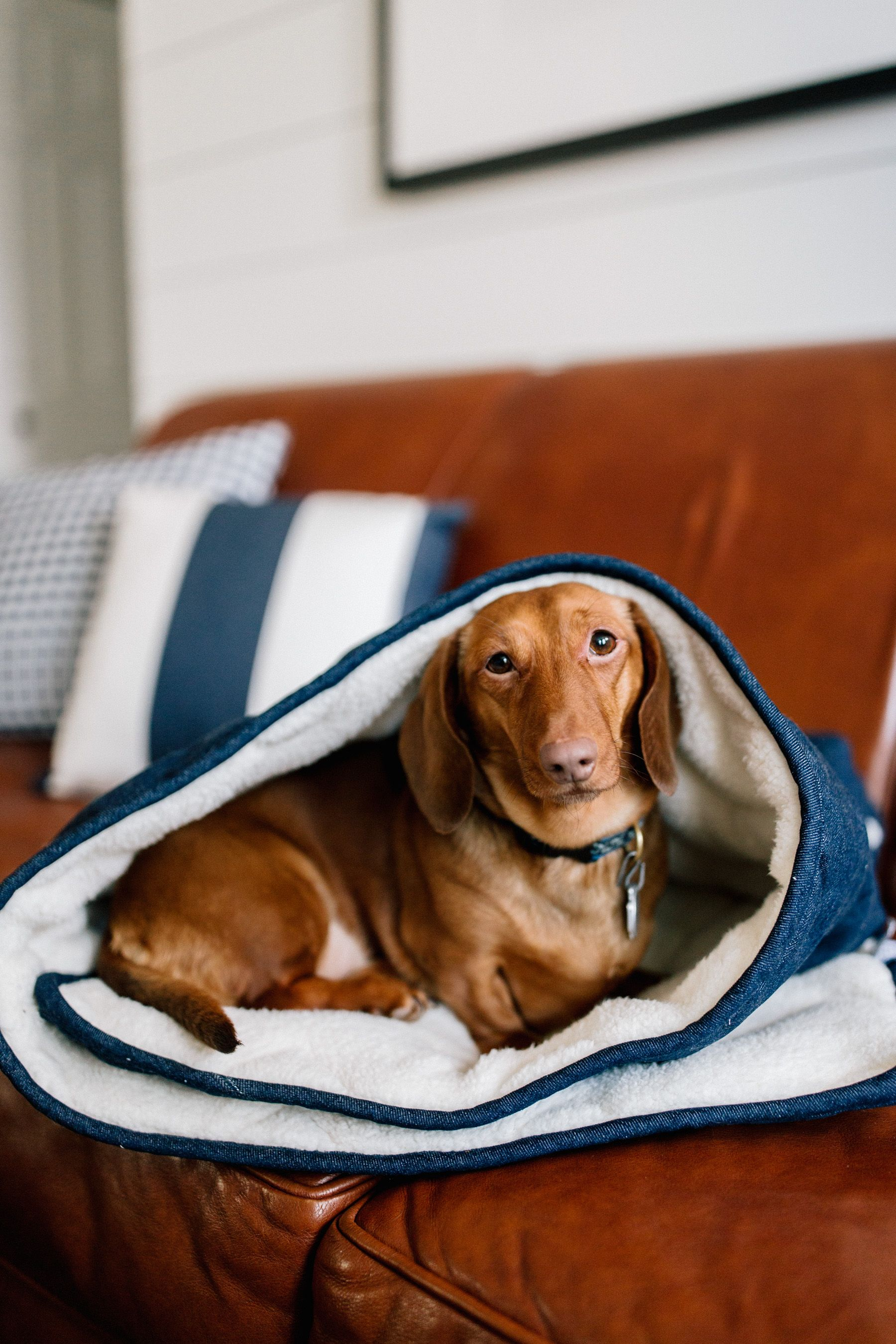 The Cutest Dog Products The Company Store Preppy dog