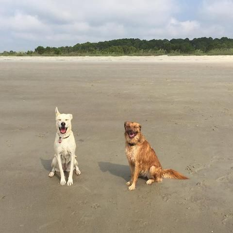 Island Time Dog Beach Pet Friendly Beach Dog Friends