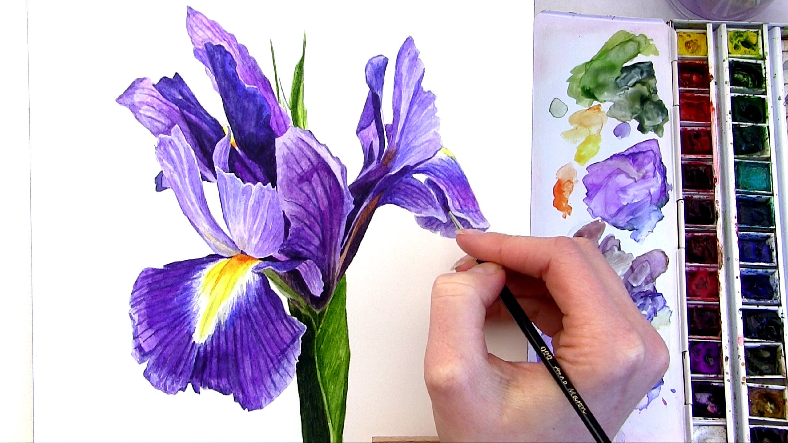 How To Paint A Multi Coloured Flower In Watercolour Iris Painting Watercolor Flowers Paintings Flower Painting