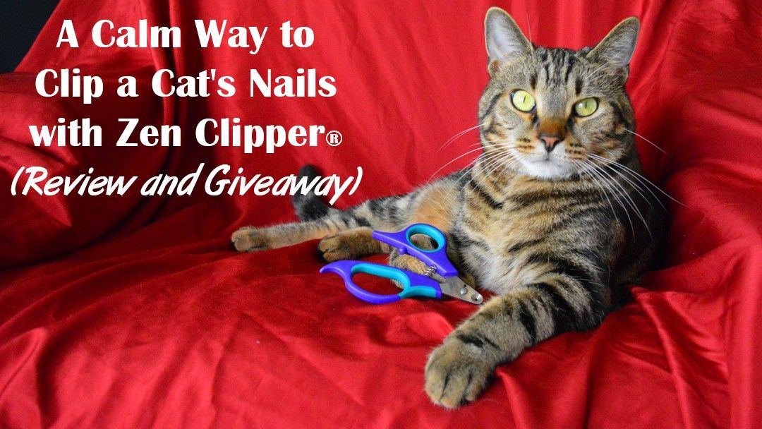 A calm way to clip a cats nails with zen clipper review