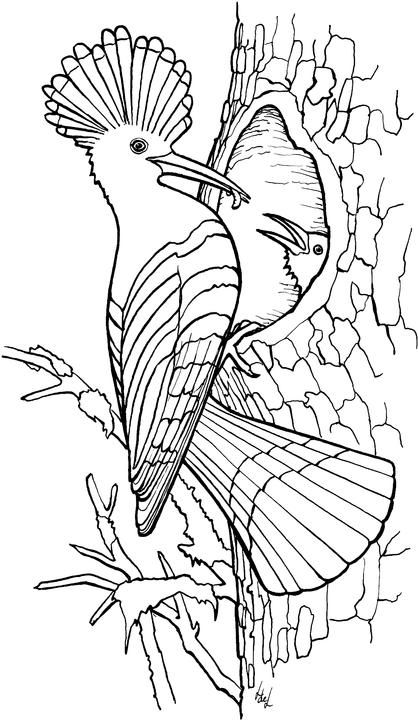 Bird coloring pages i want to color draw create Pinterest Bird - new free coloring pages quail