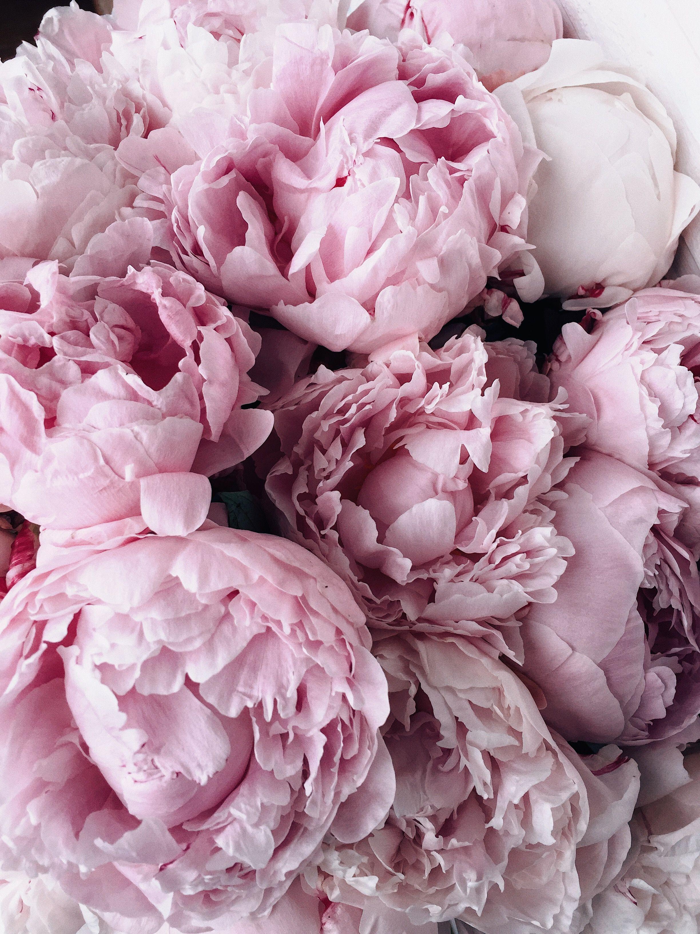 цветы фото розовые