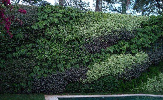 Dicas para montar um muro verde 1