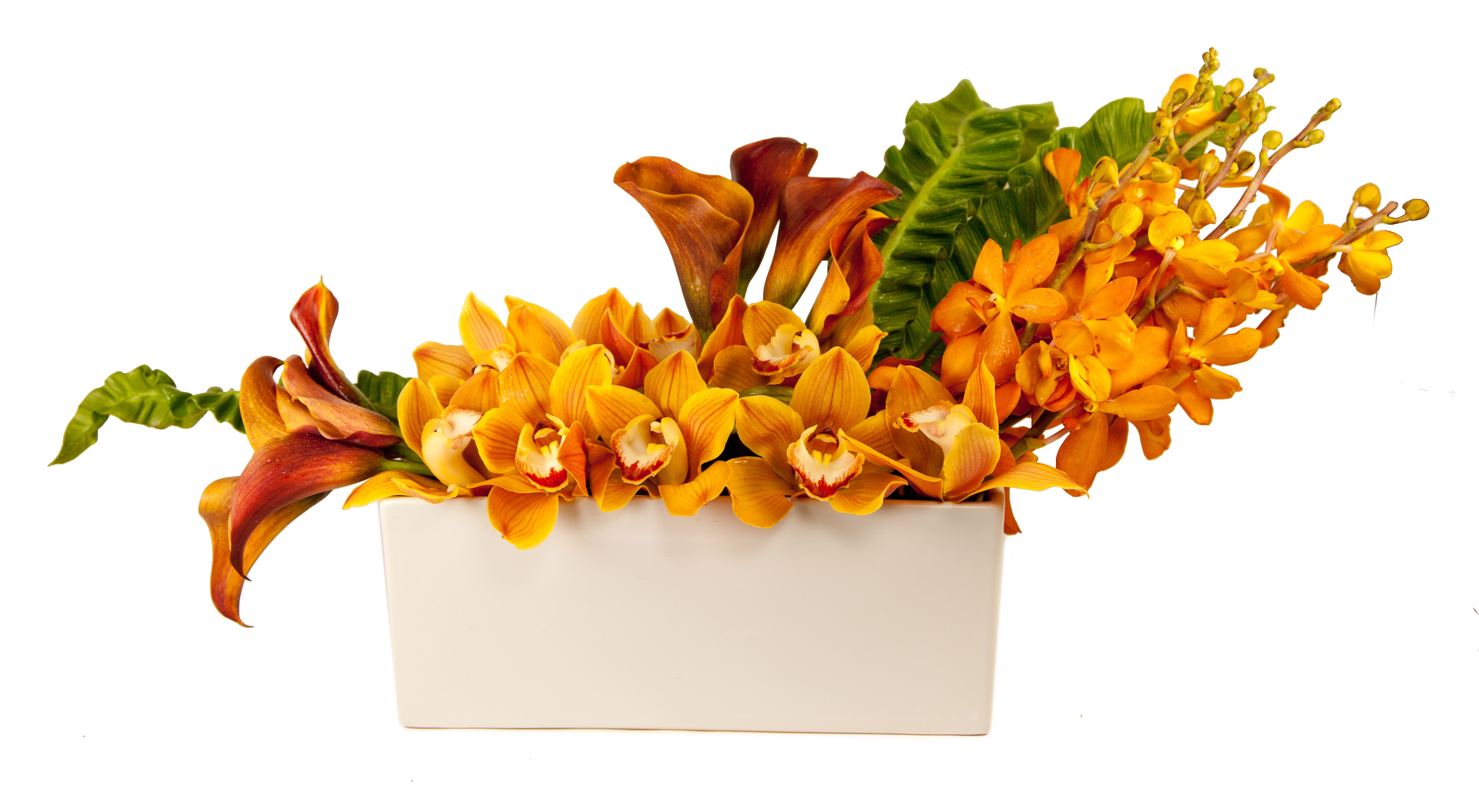 Orange flowers Same day flower delivery, Flower delivery