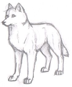 easy animals to sketch - Google Search | wolf | Pinterest ...