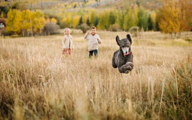 Family Photo Ideas With Dogs