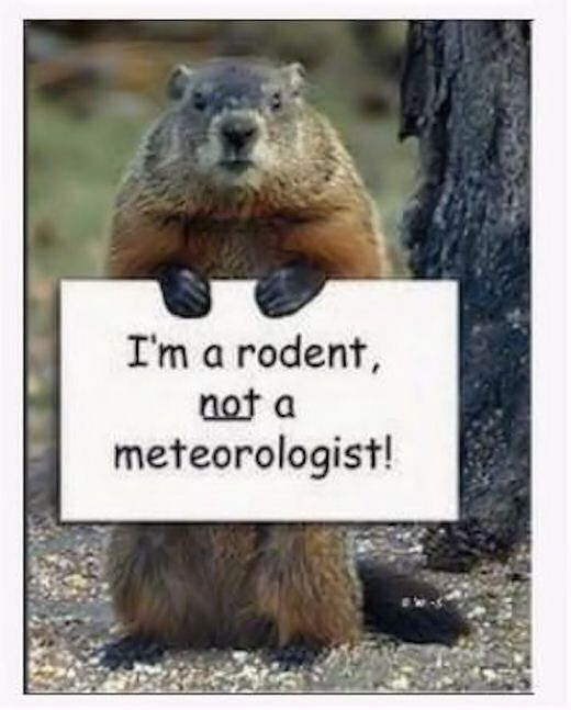 I M Not A Meteorologist Quotes Quote Funny Quotes Ground Hogs Day Groundhogs Day Groundhogs Day Quotes Groundhogs D Happy Groundhog Day Groundhog Day Groundhog