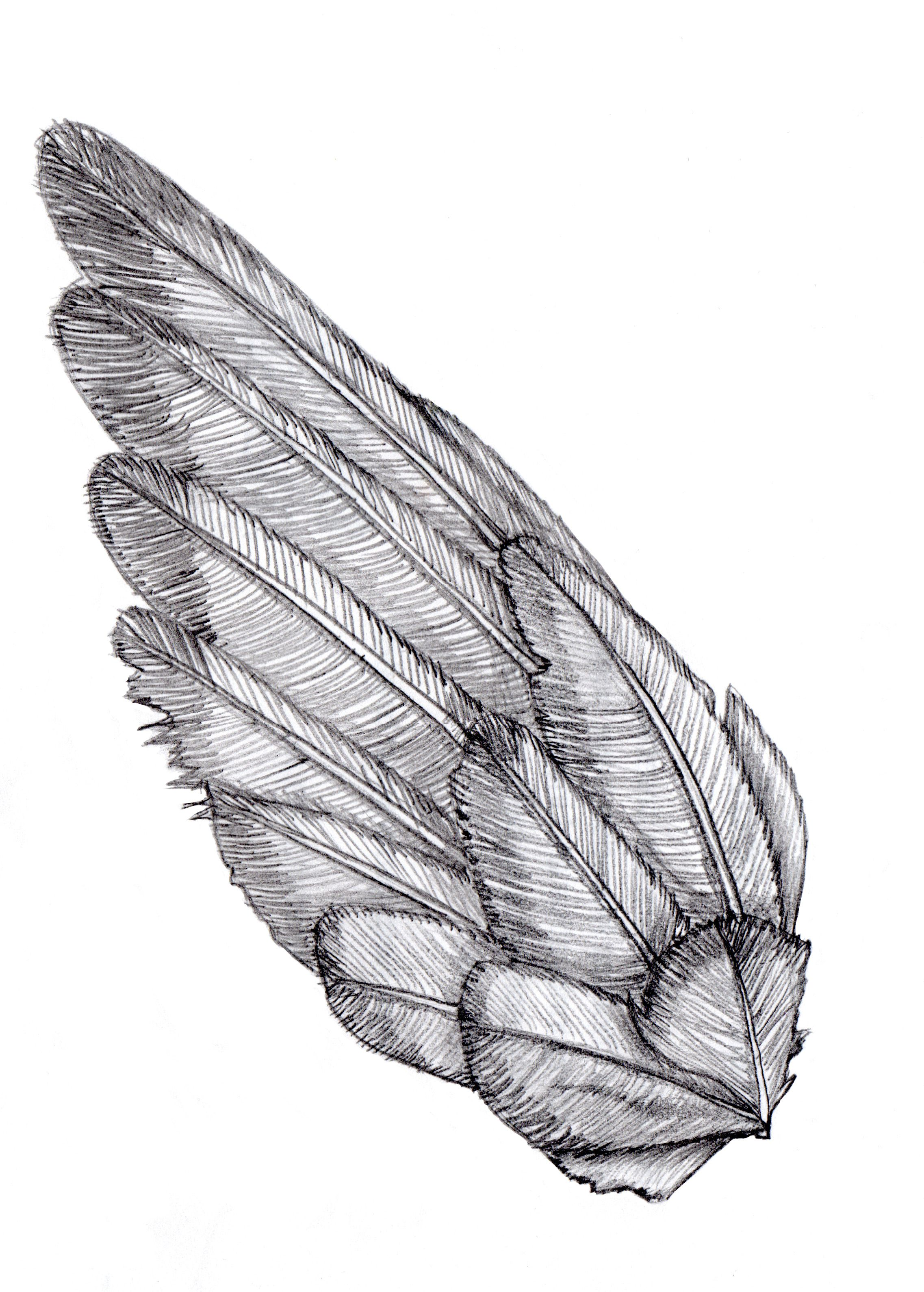 Line Drawing Bird : Wing sketch shoulder bird and tattoo
