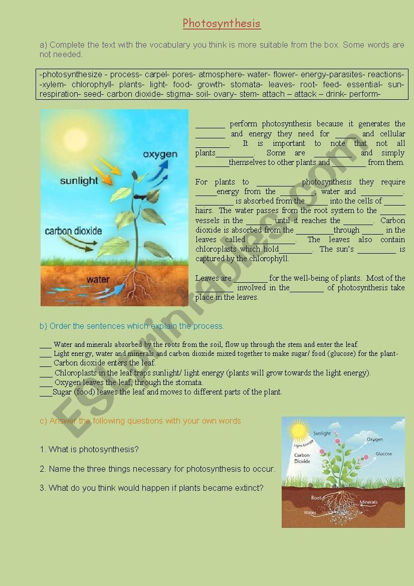 Photosynthesis ESL worksheet by nbcnas in 2020