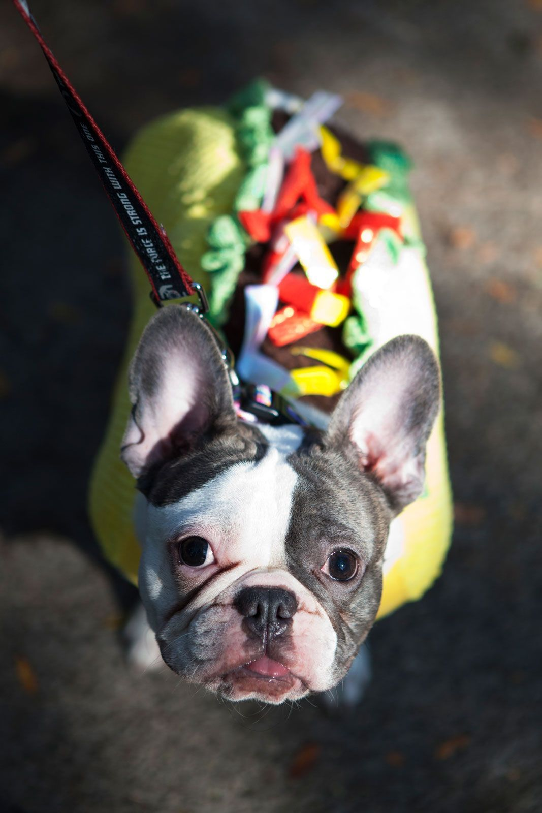 Would you like fries with that? #refinery29 http://www.refinery29.com/2014/10/76848/nyc-halloween-dog-parade-pictures-2014#slide-13