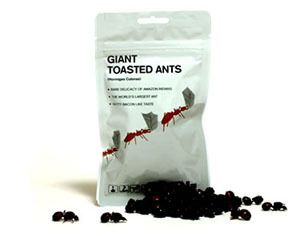 Giant Toasted Leafcutter Ants Edible Insects Ants Unusual Gifts