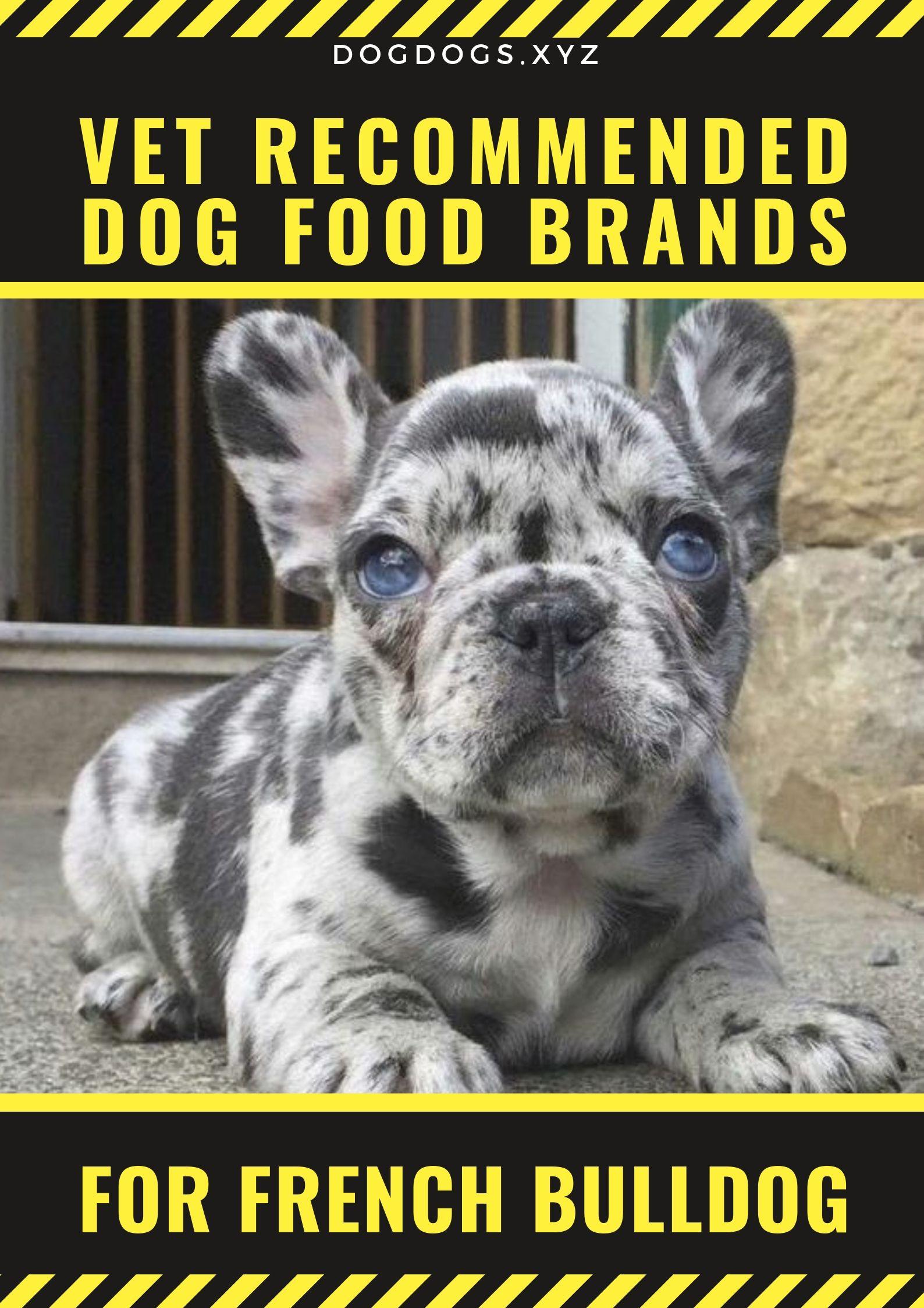 5 Veterinarian Recommended Dog Food Options Dog Food Brands Dog