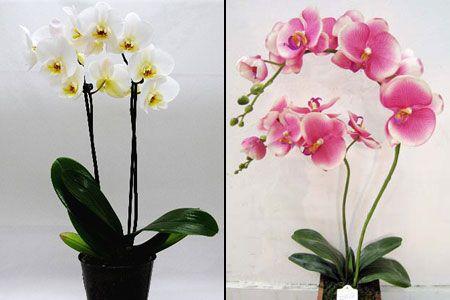 орхидеи фото - بحث Google