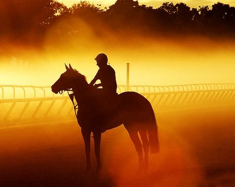 Horse And Rider At Dawn SilhouetteBeautiful HorsesPretty AnimalsRacehorseHorse