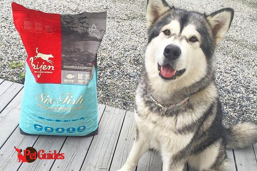 ORIJEN Tundra Dry Dog Food Dog food recipes, Grain free