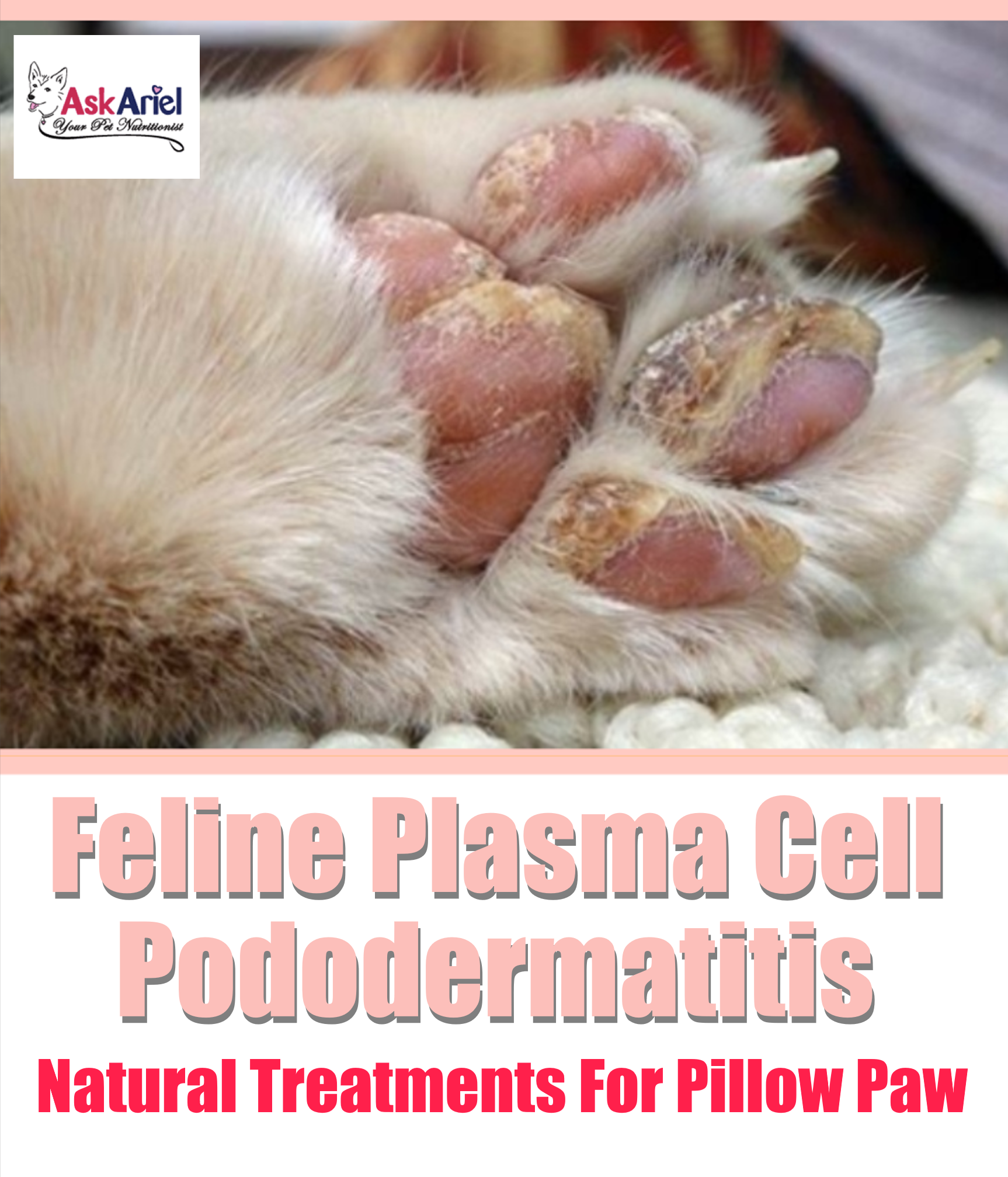 Does your kitty have red swollen paw pads? Pillow Foot is ...