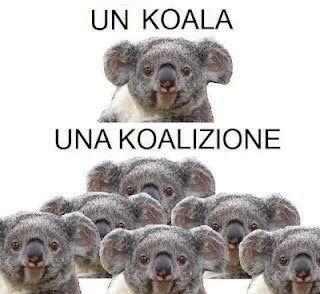 frasi simpatiche koala