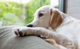Spaying and Neutering Dogs 101: The Procedure, Recovery ...