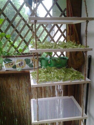 kitchen drying rack marble table for sale kräuter trockner | zahrada pinterest herbs, gardens ...