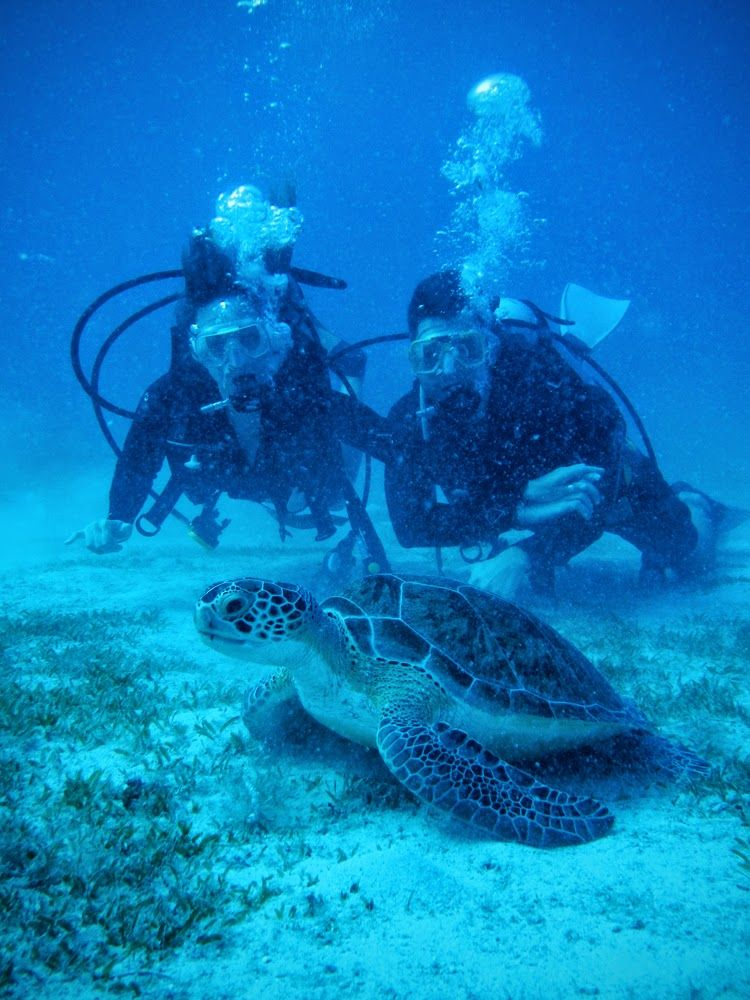 diving with sea turtles | Scuba, Diving, Hawaii