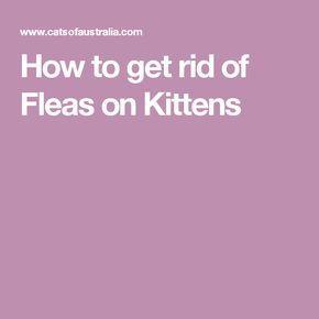 Pin By Sara On Kitten Care In 2020 Fleas On Kittens Flea