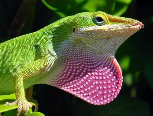 Pin On Florida Reptiles