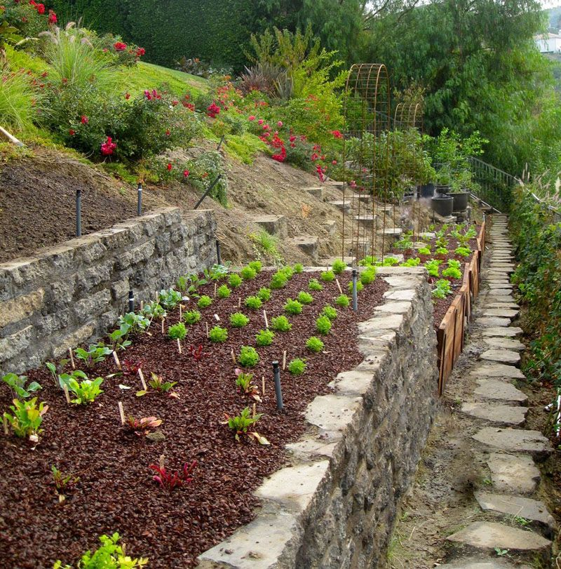 How To Turn A Steep Backyard Into A Terraced Garden Sloped
