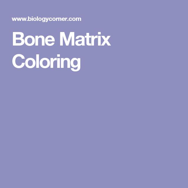 Bone Matrix Coloring   Anatomy   Pinterest   Matrix color and Anatomy