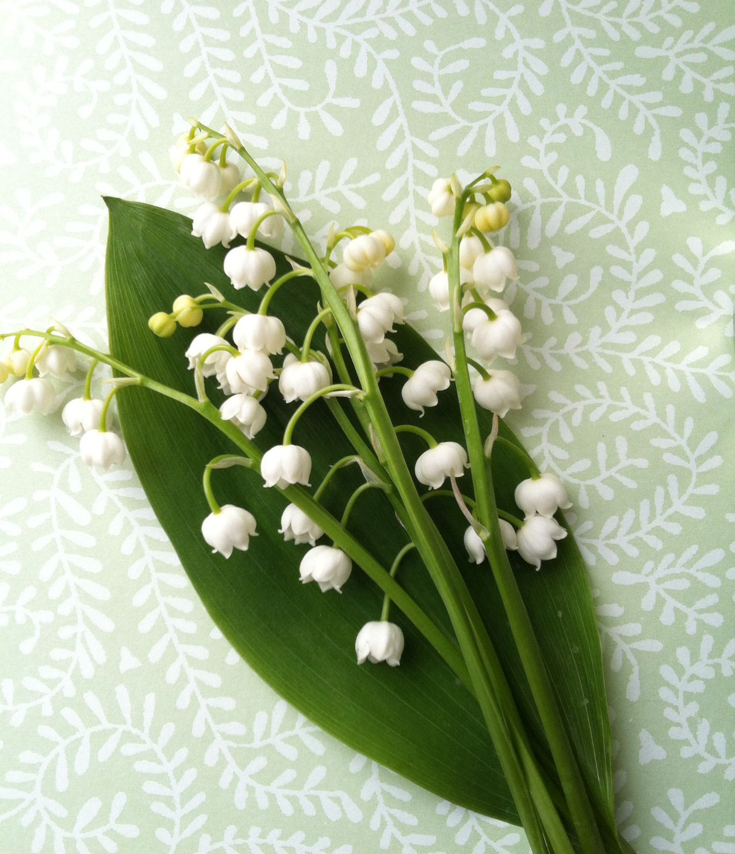 Liljekonval. Foto Pernilleshave Lily of the valley