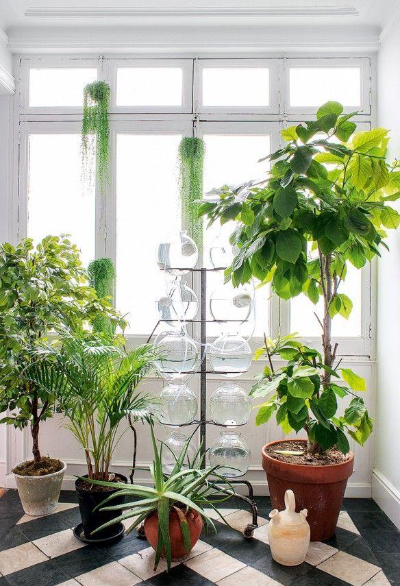 Des plantes devant la fen tre les fenetres elle peut et for Devant la fenetre