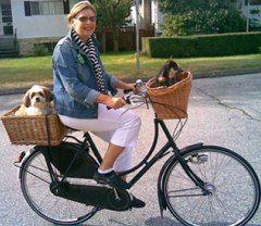 Ride Bike With Cat In Front Basket Bike Biking With Dog Dutch Bike
