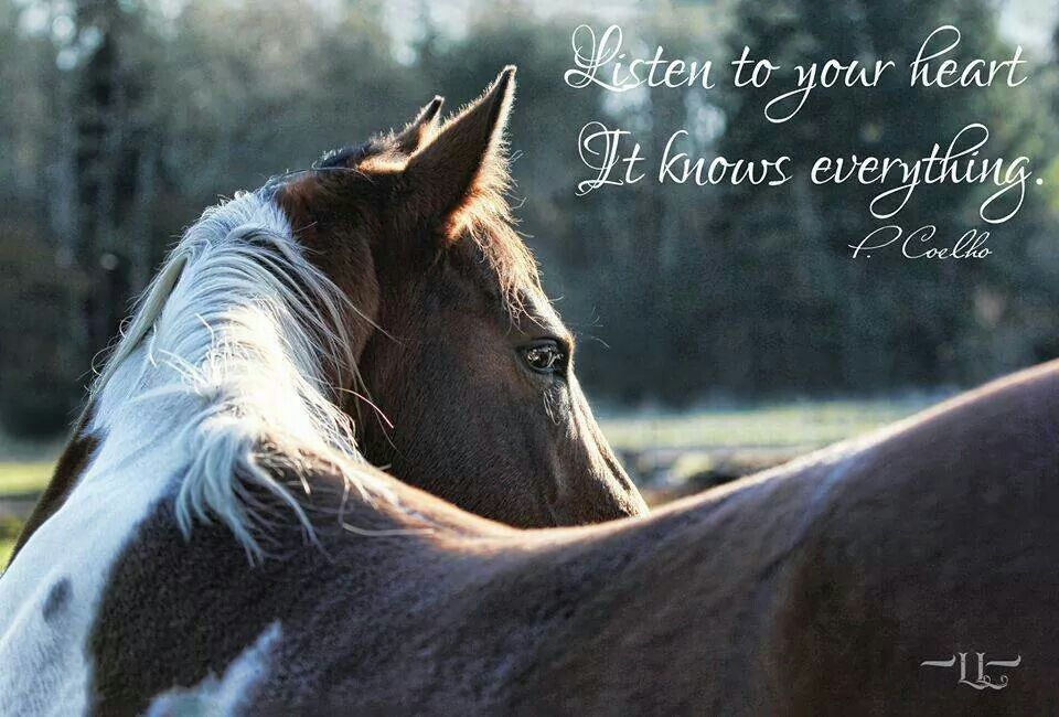 Horse Quotes | Horseback Riding | Pinterest