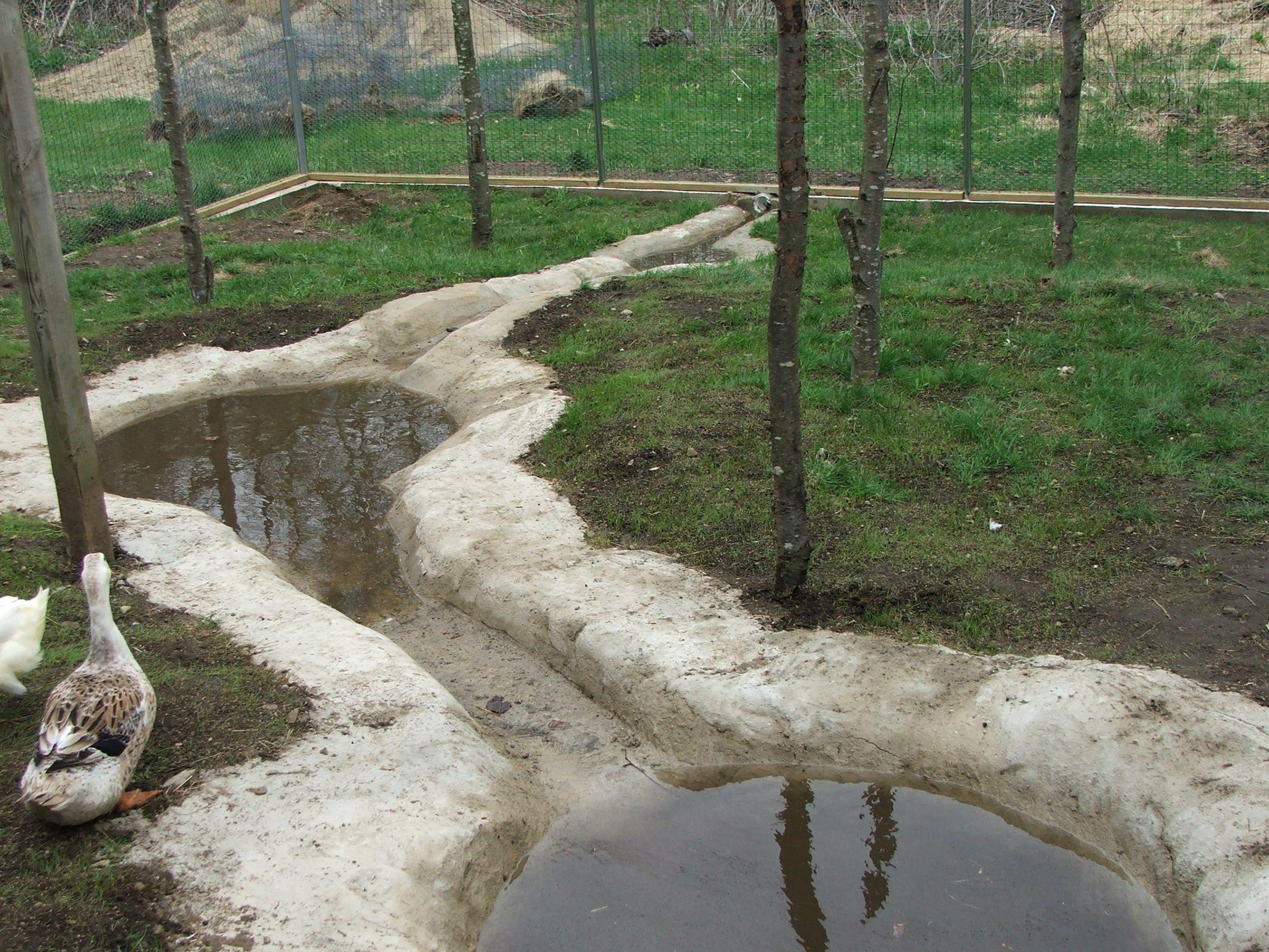 Building a predator proof pen backyard ducks duck pond