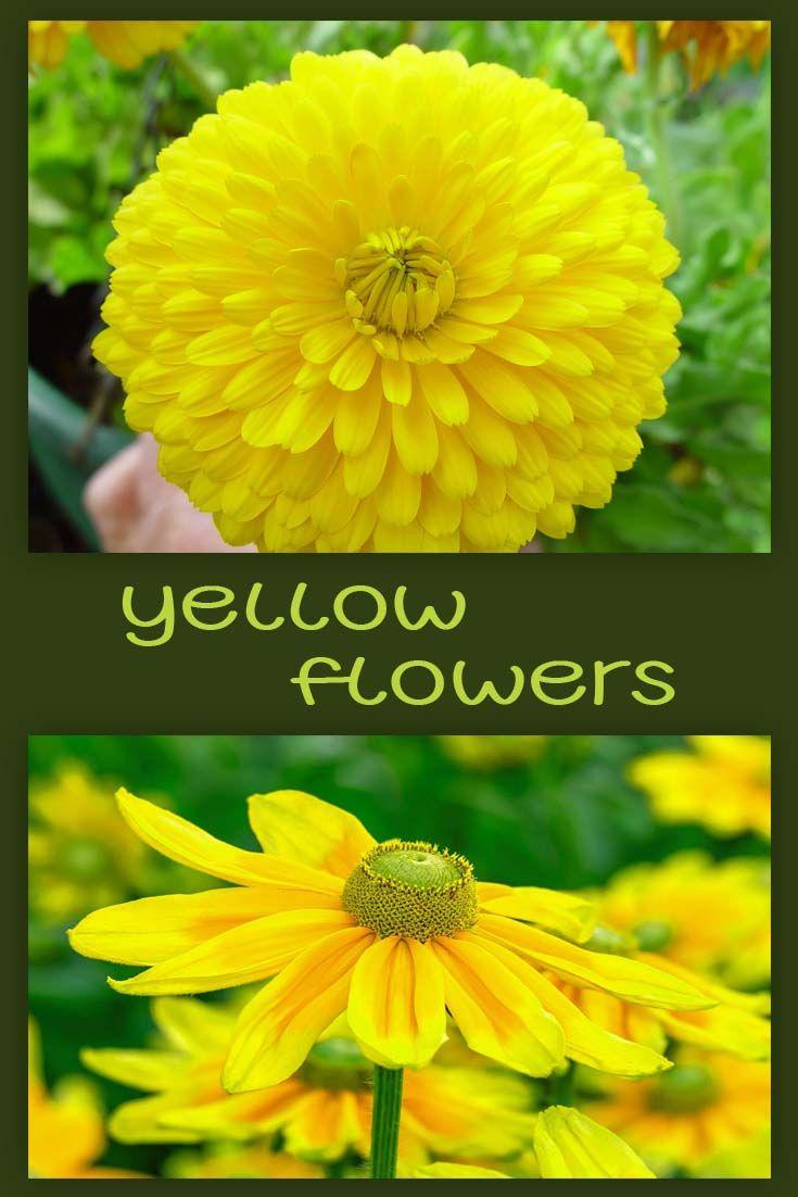 Beautiful Yellow Flowers Flowers Pinterest Yellow Flowers And