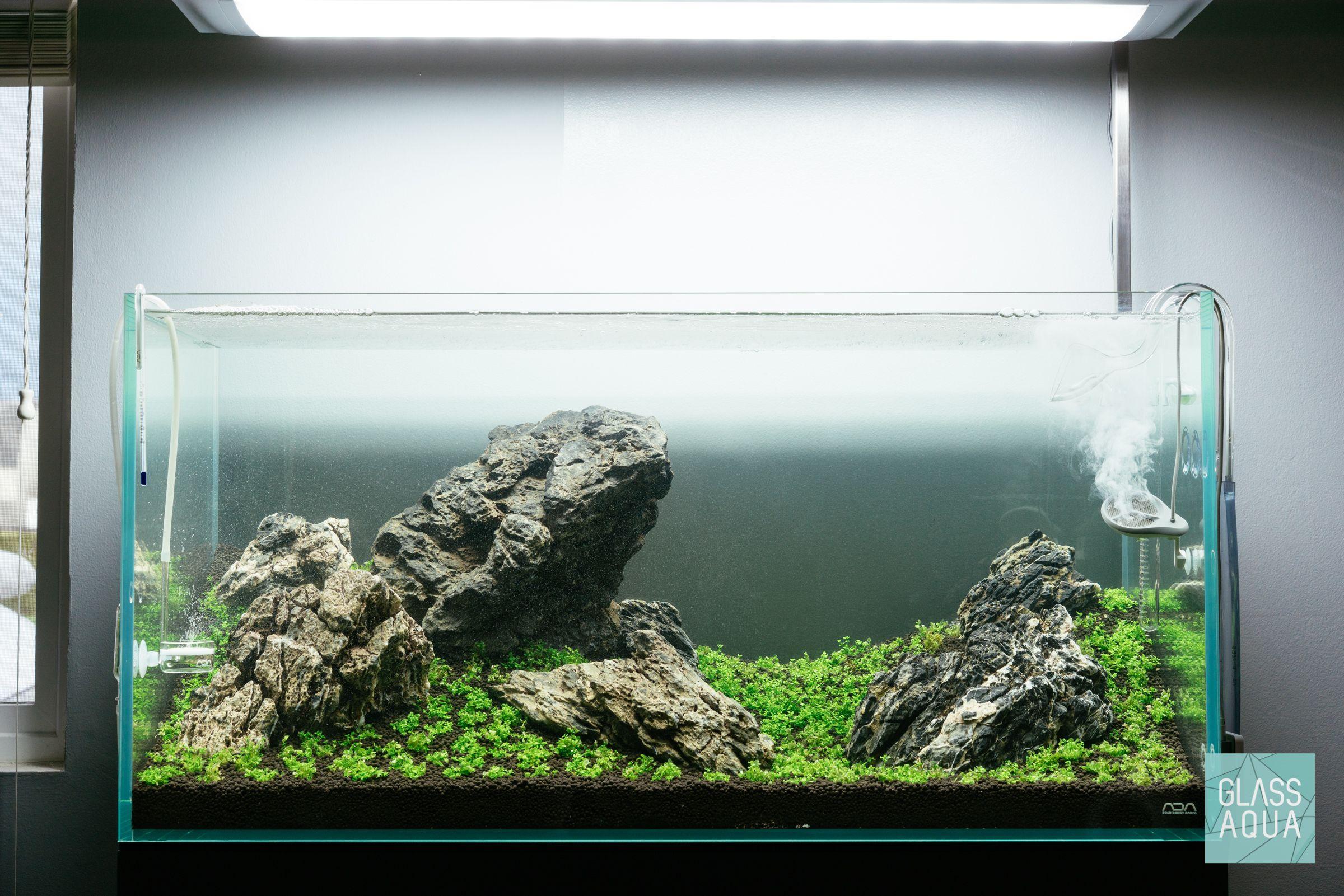 Week 2 Of Our Iwagumi Aquascape Layout Utilizing A Single Aquatic Foreground Plant Akuarium
