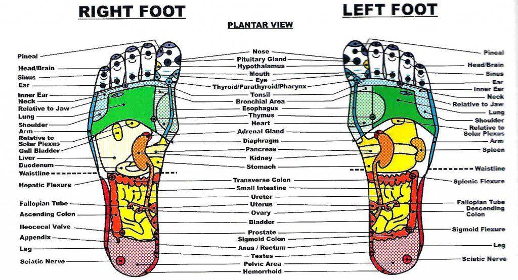 The Benefits of Foot and Hand Reflexology | Reflexology chart