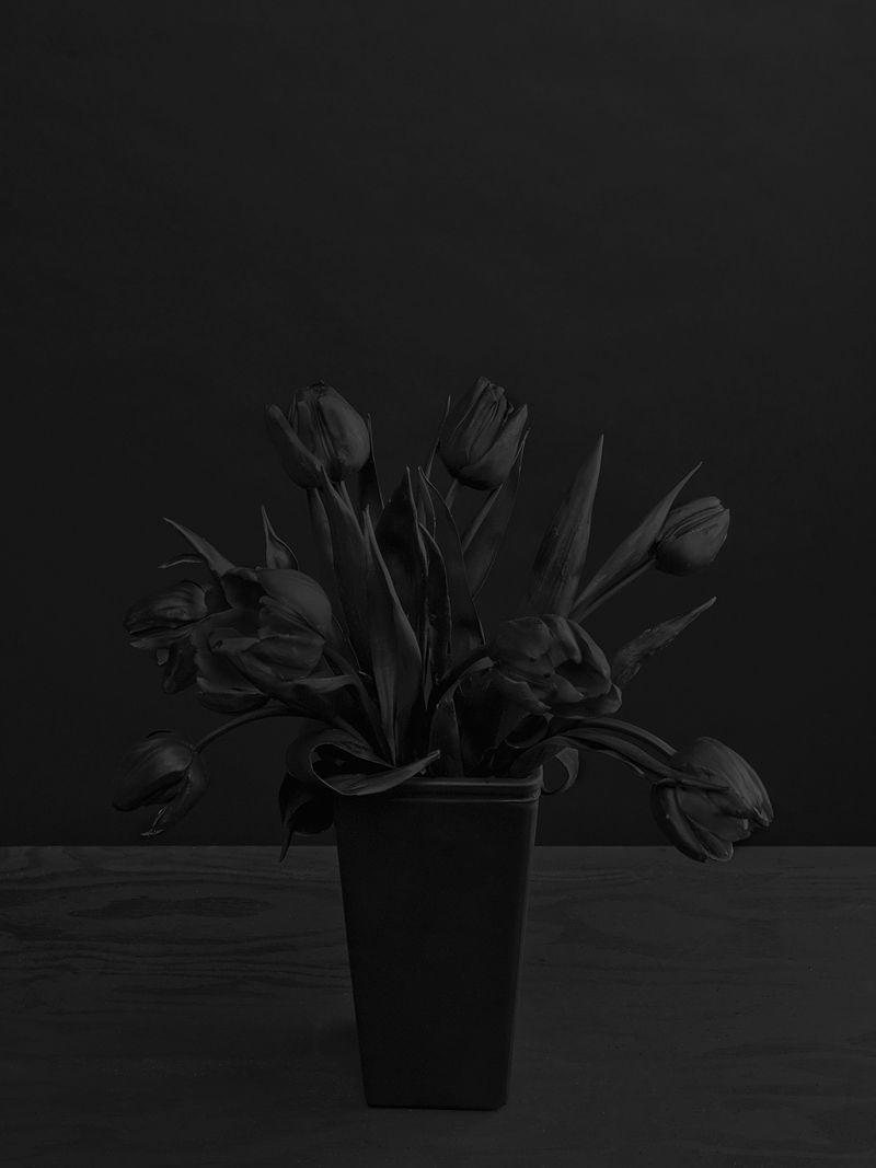 Black Flowers By Daniel Seung Lee Black Tulips Black Flowers Black Aesthetic