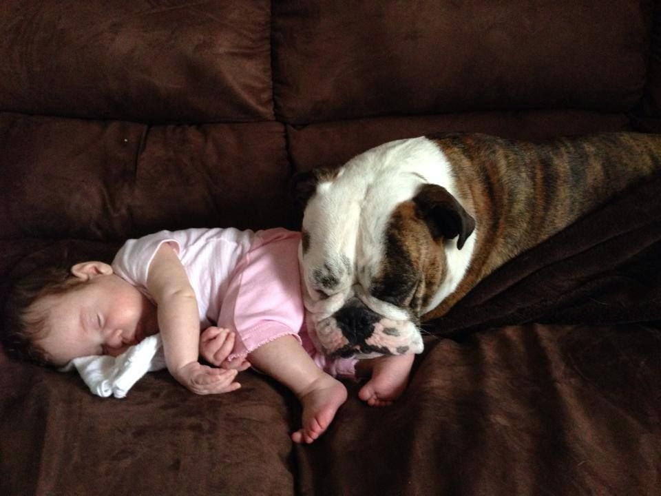 ❤ No place safer, than the loving care of a Bully ❤  Posted from Baggy Bulldogs