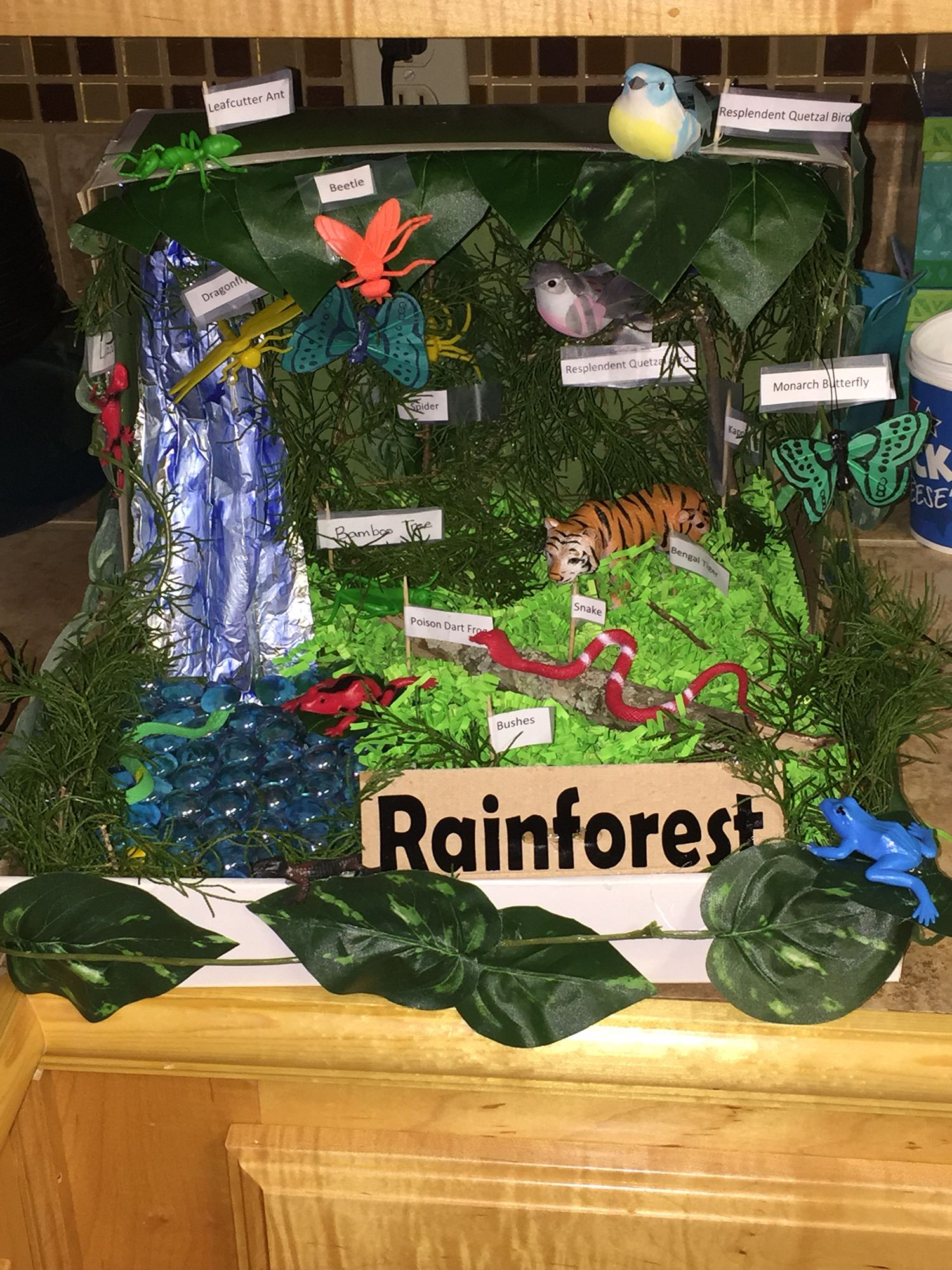 Shoebox Rainforest ecosystem Rainfall (aluminum foil), water (marbles),  grass (easter grass) animals (dollar tree) and trees from the yard.