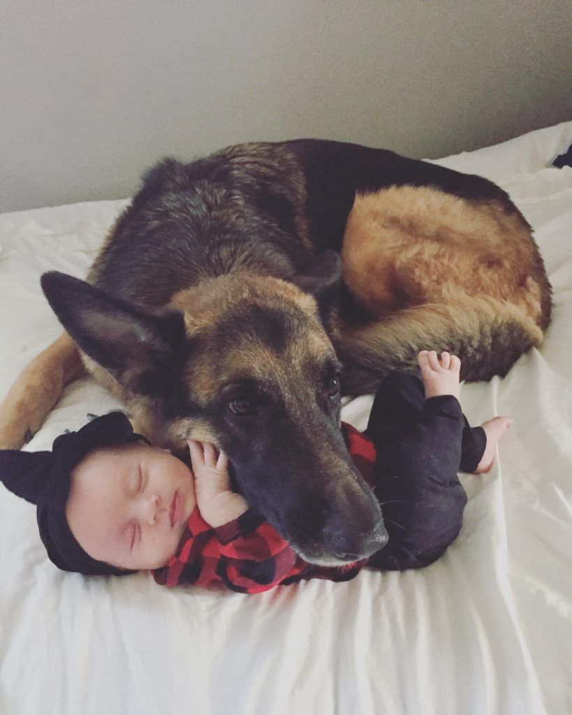 Momhood German Shepherd Photography