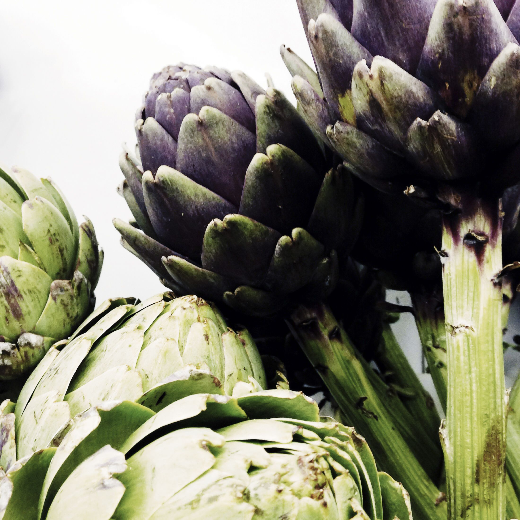 Artichokes make great arrangements for the home