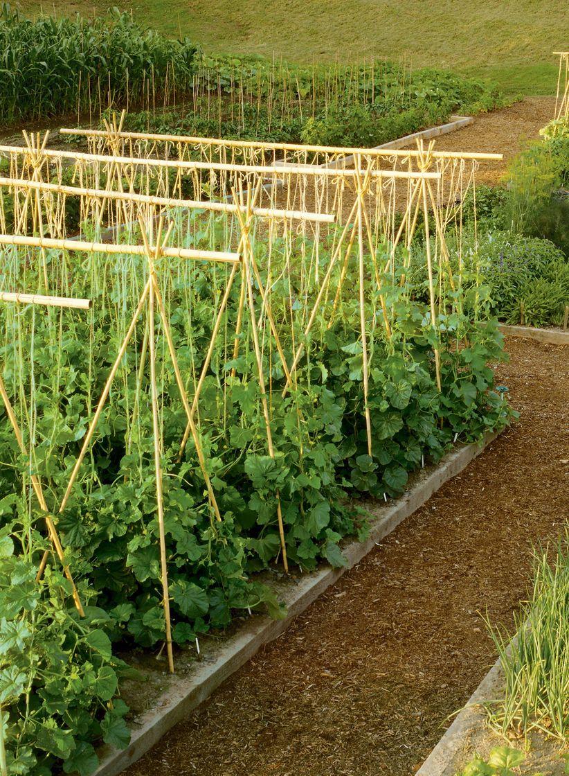 bamboo garden stakes. Bamboo Poles, Stakes, Sticks | Gardeners.com Garden Stakes A