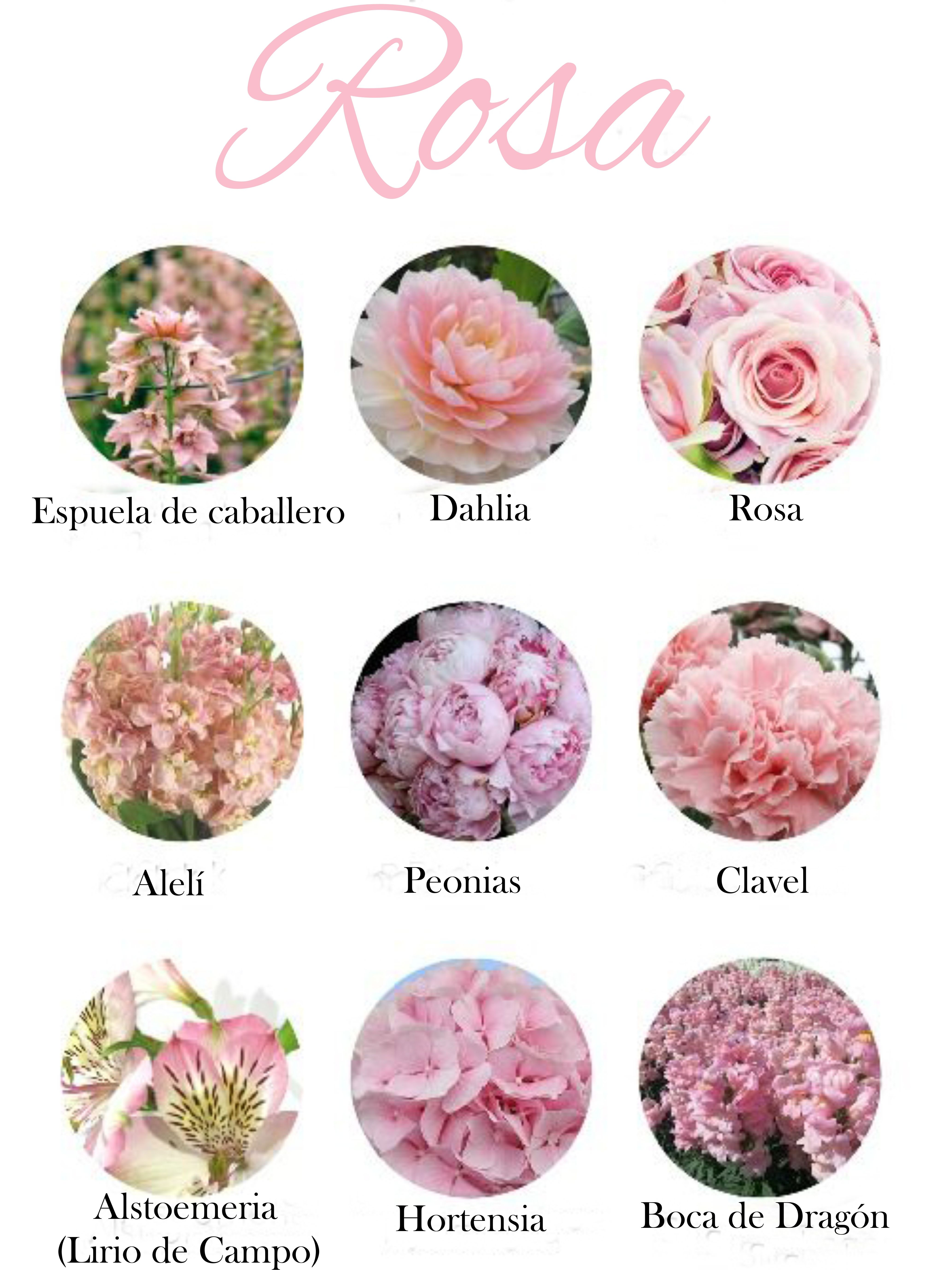 Flores de color rosa claro tonos suaves light pink - Clases de flores y sus nombres ...