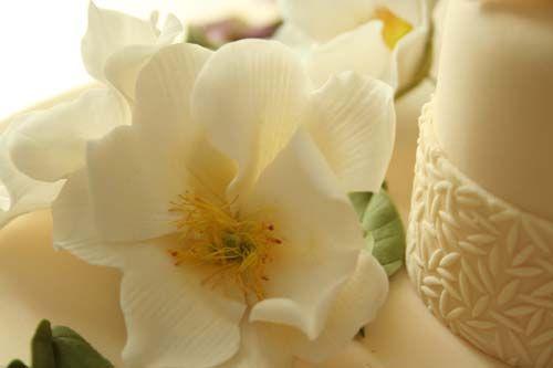 http://4.bp.blogspot.com/-jNzLsRD8YRM/SWVuiAP-EEI/AAAAAAAAAHA/RiSvN0iGqek/s1600/IMG_7307.JPG