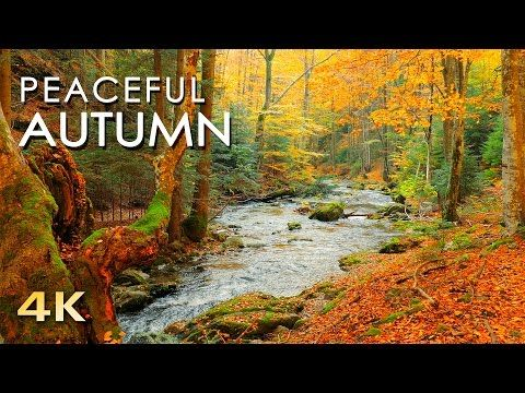 Relaxing Autumn Forest - 4K Beautiful Nature Video & River Sounds