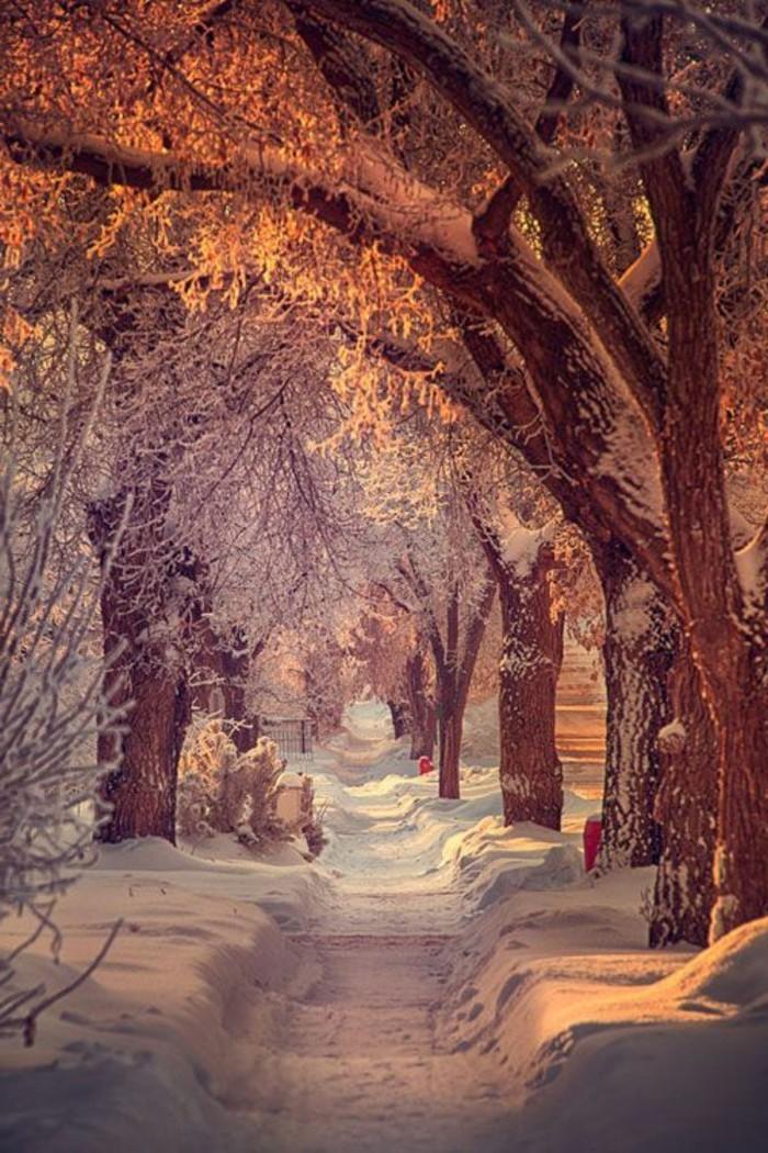 صورة الشتاء الجميلة مسار في الثلج V 2021 G Priroda Medved