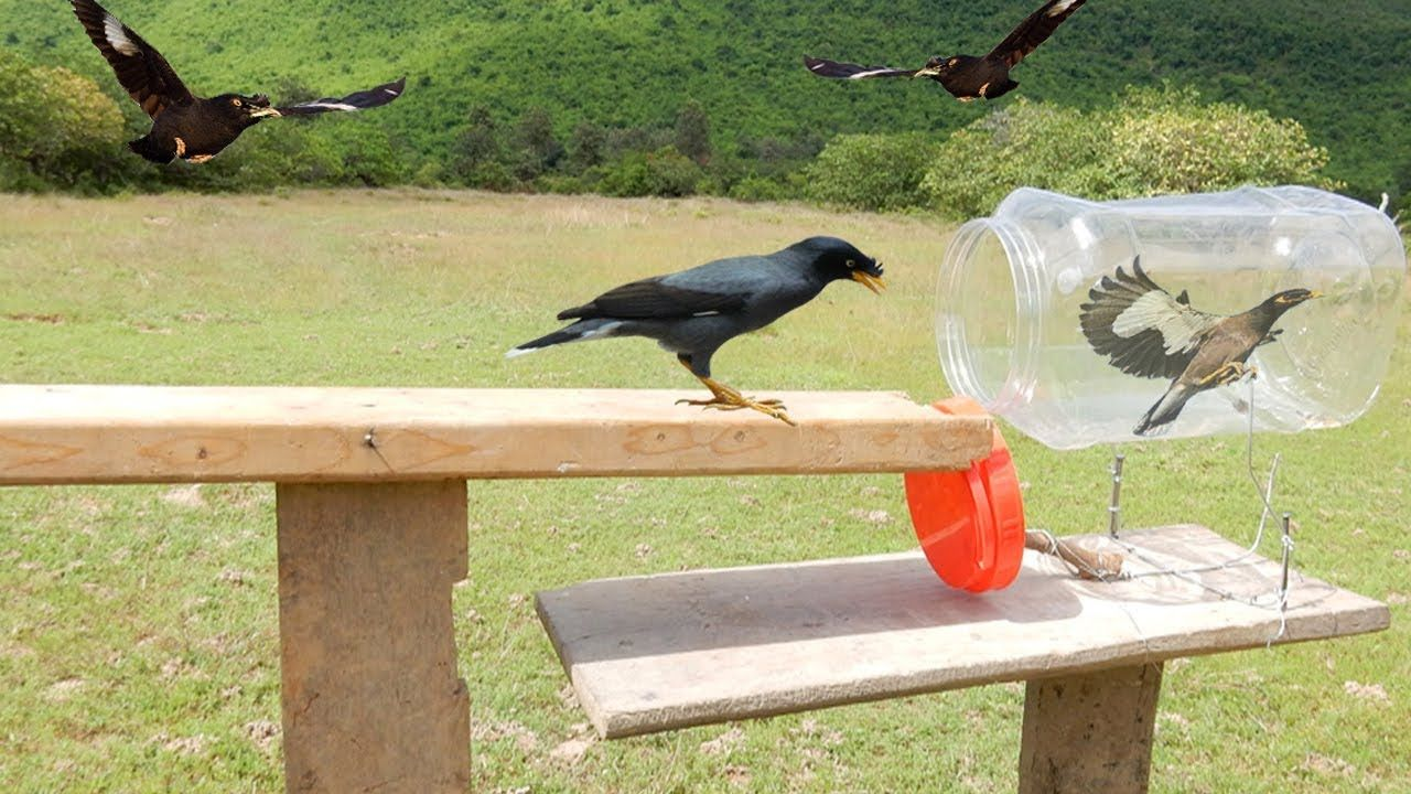 Awesome Quick Bird Trap Using Plastic Bottle - Easy Best Bird Traps Work.