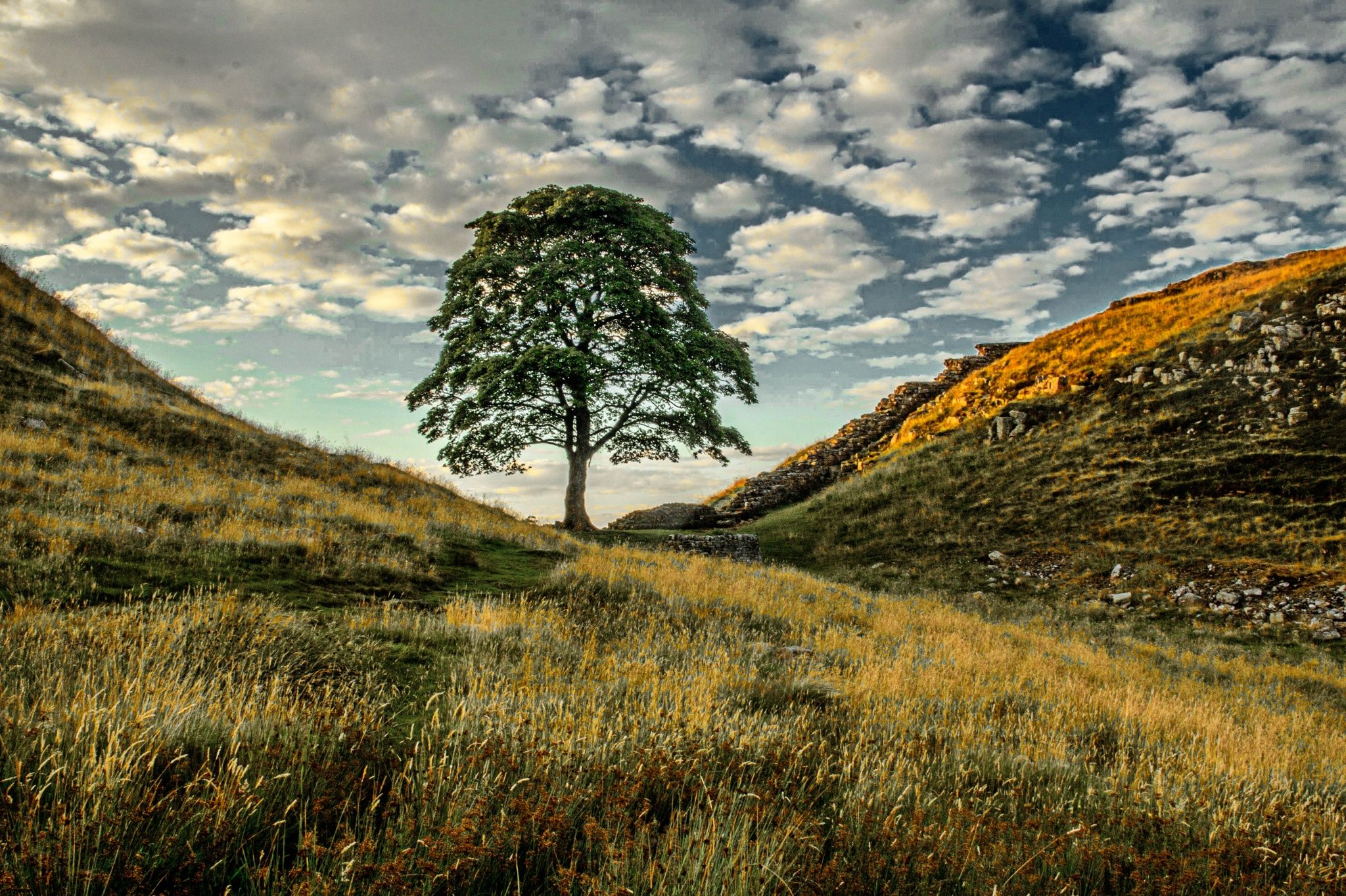 Sycamore by Teresa Mazur on 500px